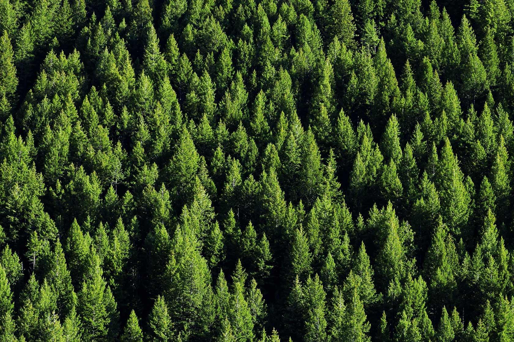 Opposti fondamentalismi ambientali
